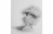 Yew Trees #114