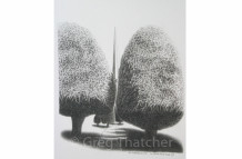 Yew Trees #107