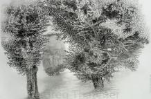 Yew Trees #62