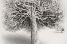 Yew Trees #66