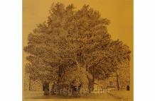 Church Yard Yew Trees #2