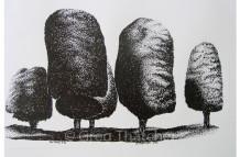 Yew Trees #50