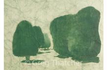 Painswick Yew Trees #9