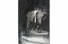 Yew Trees #102