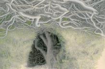 Yew Trees #118 M.M